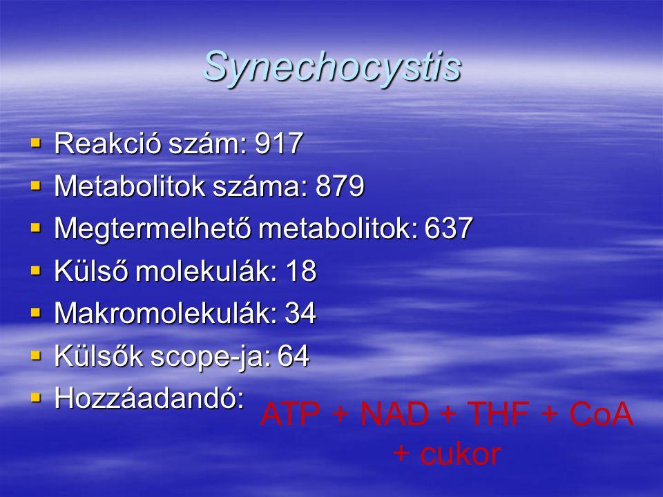 Synechocystis  Reakció szám: 917  Metabolitok száma: 879  Megtermelhető metabolitok: 637  Külső molekulák: 18  Makromolekulák: 34  Külsők scope-