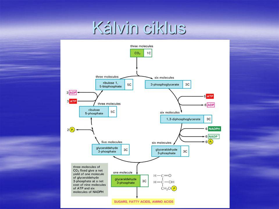 Kálvin ciklus