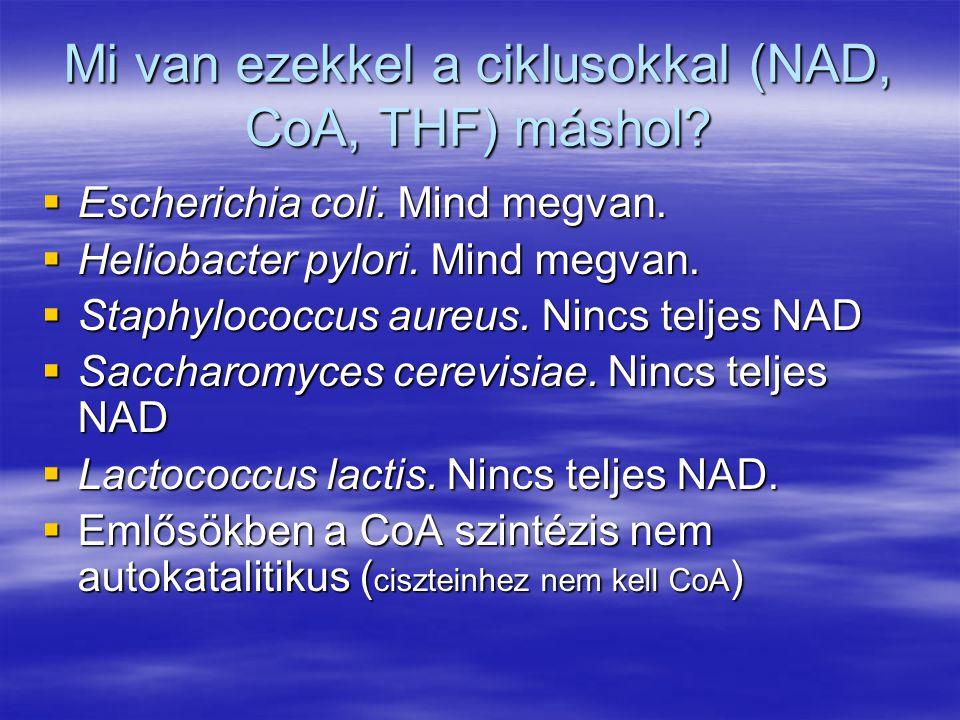 Mi van ezekkel a ciklusokkal (NAD, CoA, THF) máshol?  Escherichia coli. Mind megvan.  Heliobacter pylori. Mind megvan.  Staphylococcus aureus. Ninc
