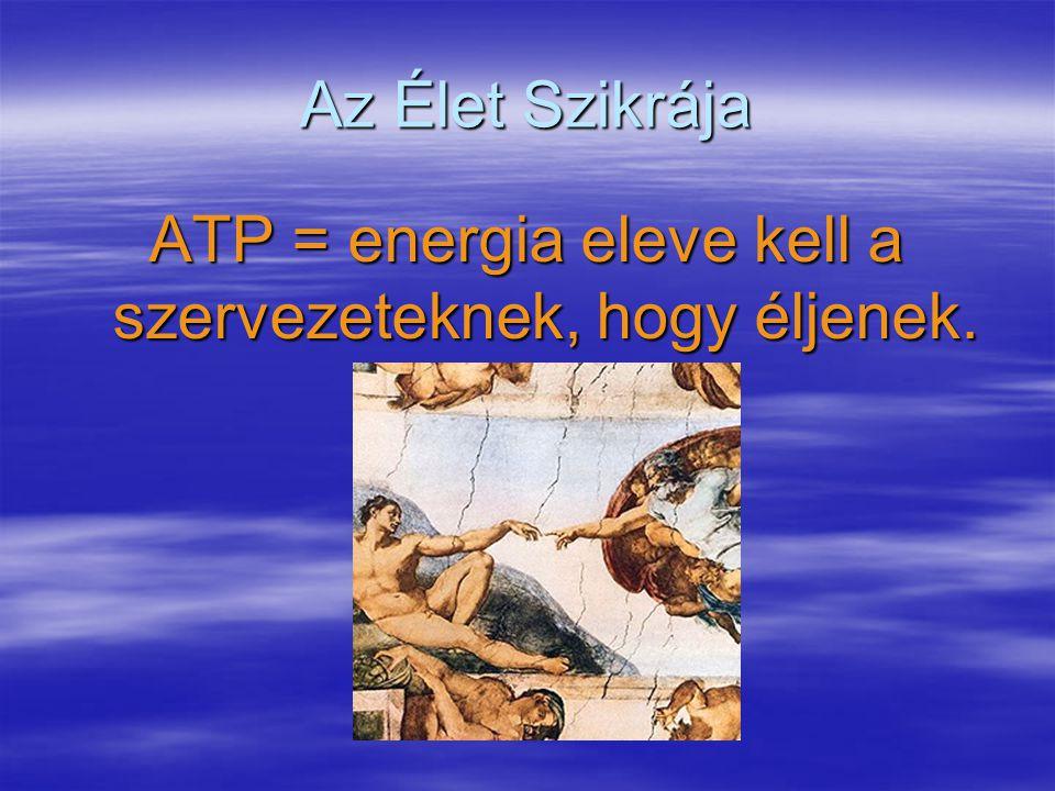 Az Élet Szikrája ATP = energia eleve kell a szervezeteknek, hogy éljenek.