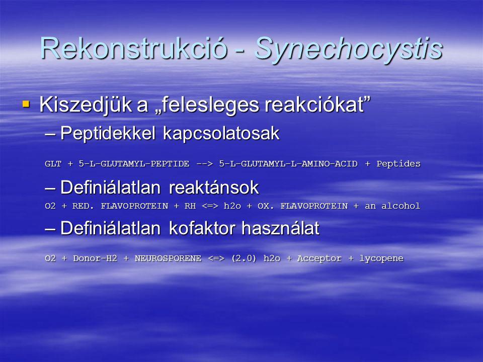 """Rekonstrukció - Synechocystis  Kiszedjük a """"felesleges reakciókat"""" –Peptidekkel kapcsolatosak GLT + 5-L-GLUTAMYL-PEPTIDE --> 5-L-GLUTAMYL-L-AMINO-ACI"""