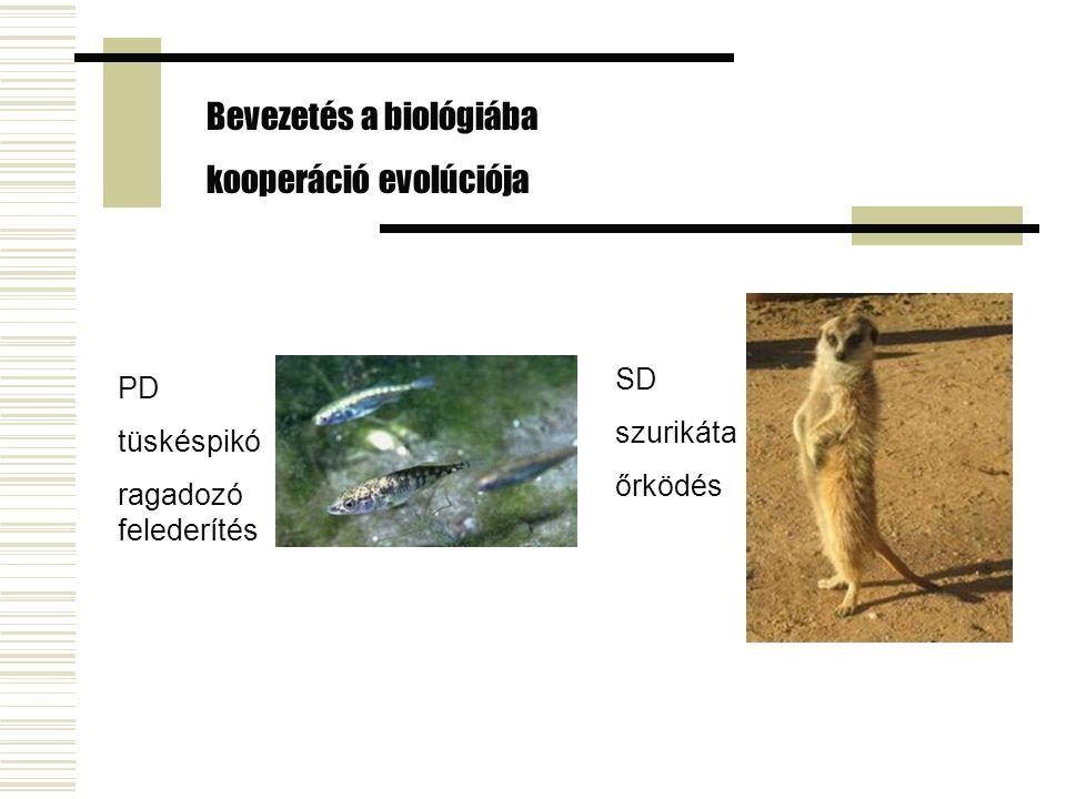 Bevezetés a biológiába kooperáció evolúciója PD tüskéspikó ragadozó felederítés SD szurikáta őrködés
