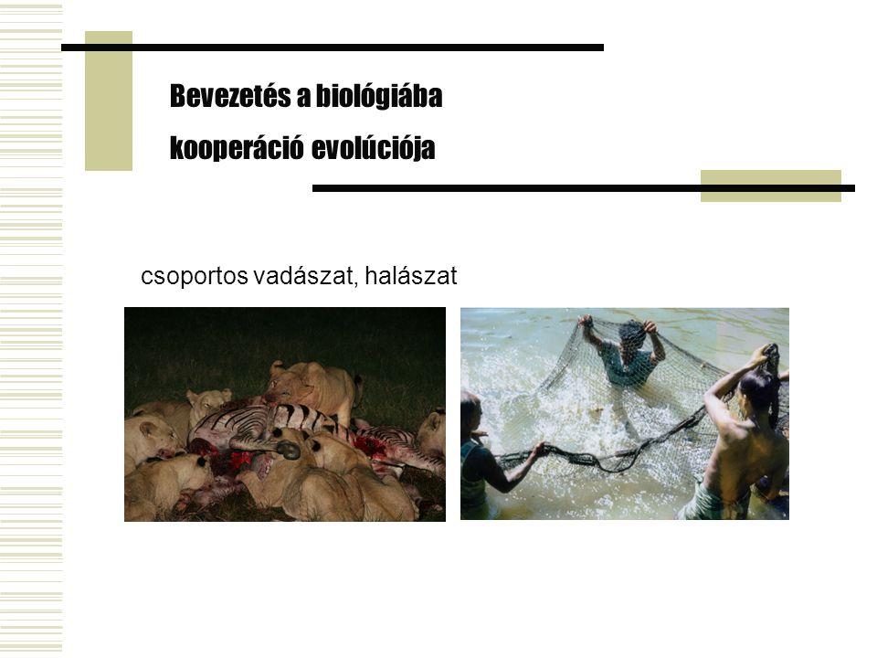 csoportos vadászat, halászat Bevezetés a biológiába kooperáció evolúciója