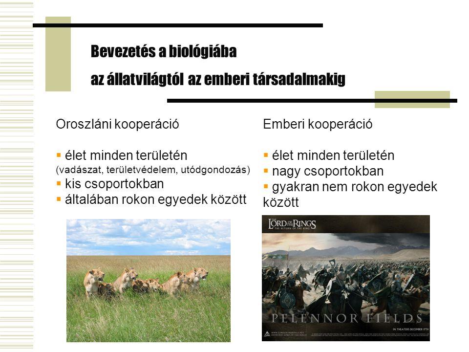 Bevezetés a biológiába az állatvilágtól az emberi társadalmakig Emberi kooperáció  élet minden területén  nagy csoportokban  gyakran nem rokon egyedek között Oroszláni kooperáció  élet minden területén (vadászat, területvédelem, utódgondozás)  kis csoportokban  általában rokon egyedek között