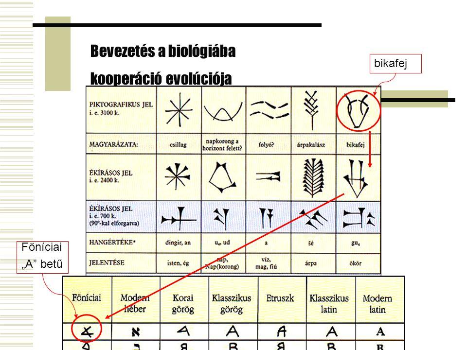 """Bevezetés a biológiába kooperáció evolúciója bikafej Föníciai """"A betű"""