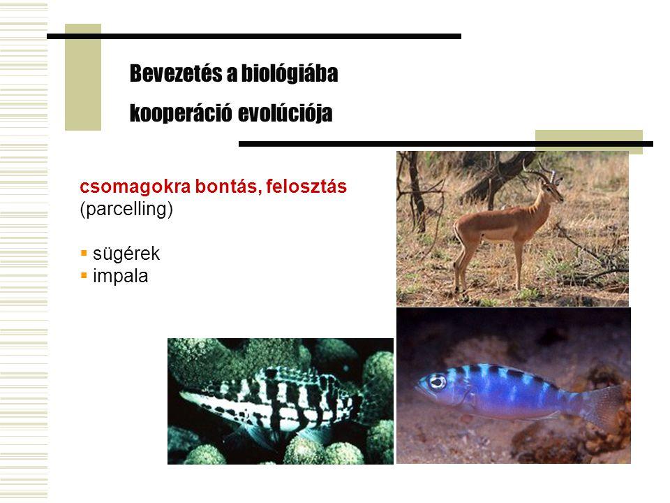 csomagokra bontás, felosztás (parcelling)  sügérek  impala Bevezetés a biológiába kooperáció evolúciója