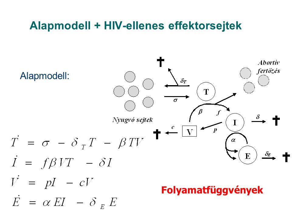 Alapmodell + HIV-ellenes effektorsejtek Alapmodell: Folyamatfüggvények