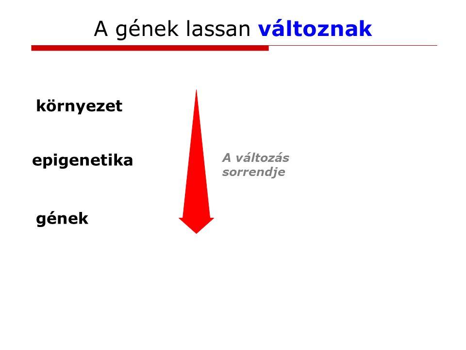 A gének lassan változnak környezet gének A változás sorrendje epigenetika