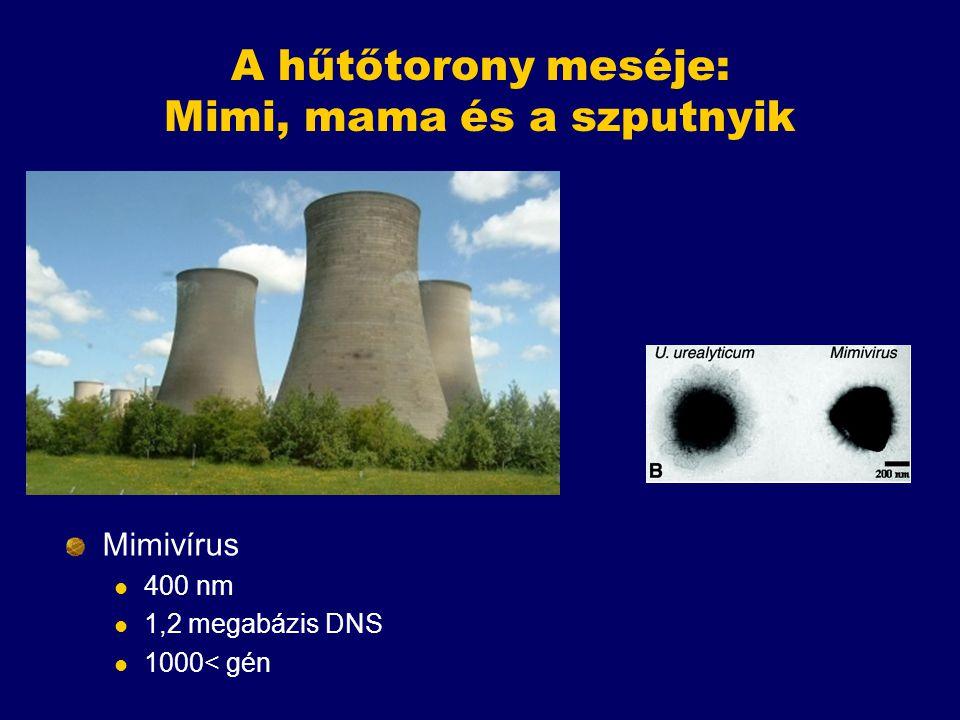 A hűtőtorony meséje: Mimi, mama és a szputnyik Mimivírus 400 nm 1,2 megabázis DNS 1000< gén