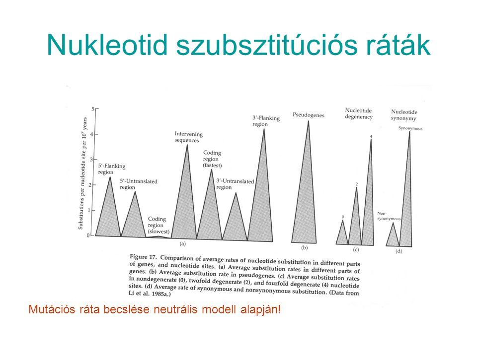 Nukleotid szubsztitúciós ráták Mutációs ráta becslése neutrális modell alapján!