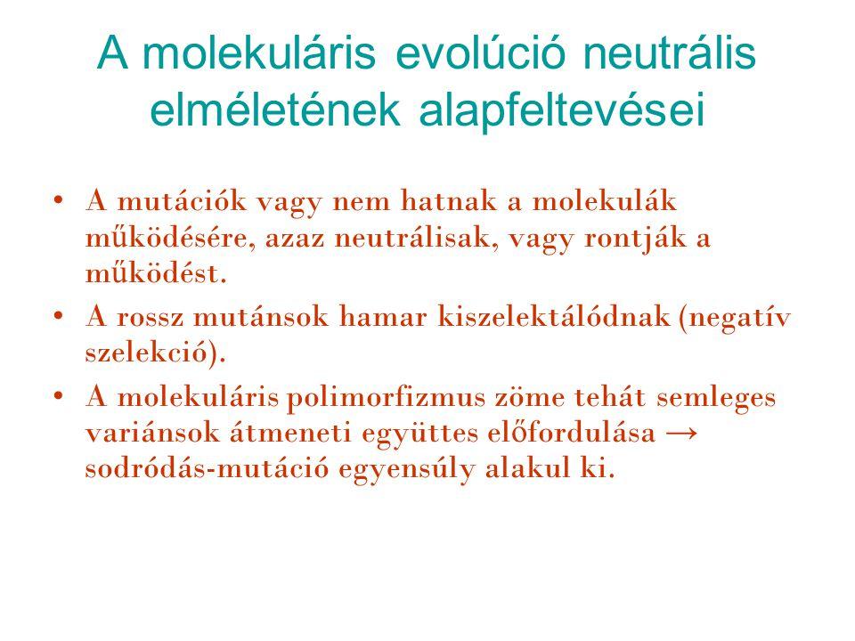 A molekuláris evolúció neutrális elméletének alapfeltevései A mutációk vagy nem hatnak a molekulák m ű ködésére, azaz neutrálisak, vagy rontják a m ű