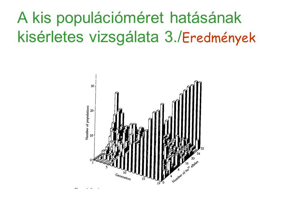 A kis populációméret hatásának kisérletes vizsgálata 3./ Eredmények