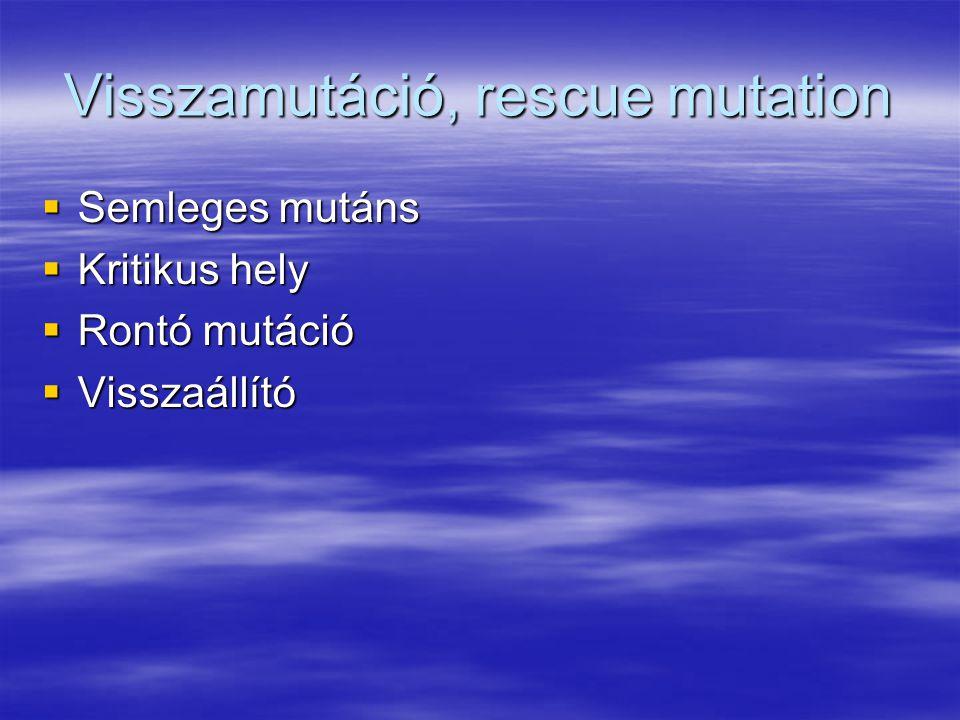 Visszamutáció, rescue mutation  Semleges mutáns  Kritikus hely  Rontó mutáció  Visszaállító