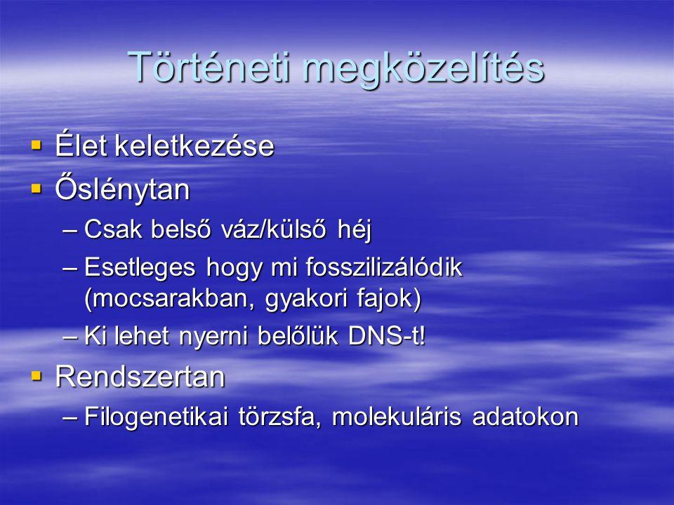 Történeti megközelítés  Élet keletkezése  Őslénytan –Csak belső váz/külső héj –Esetleges hogy mi fosszilizálódik (mocsarakban, gyakori fajok) –Ki lehet nyerni belőlük DNS-t.