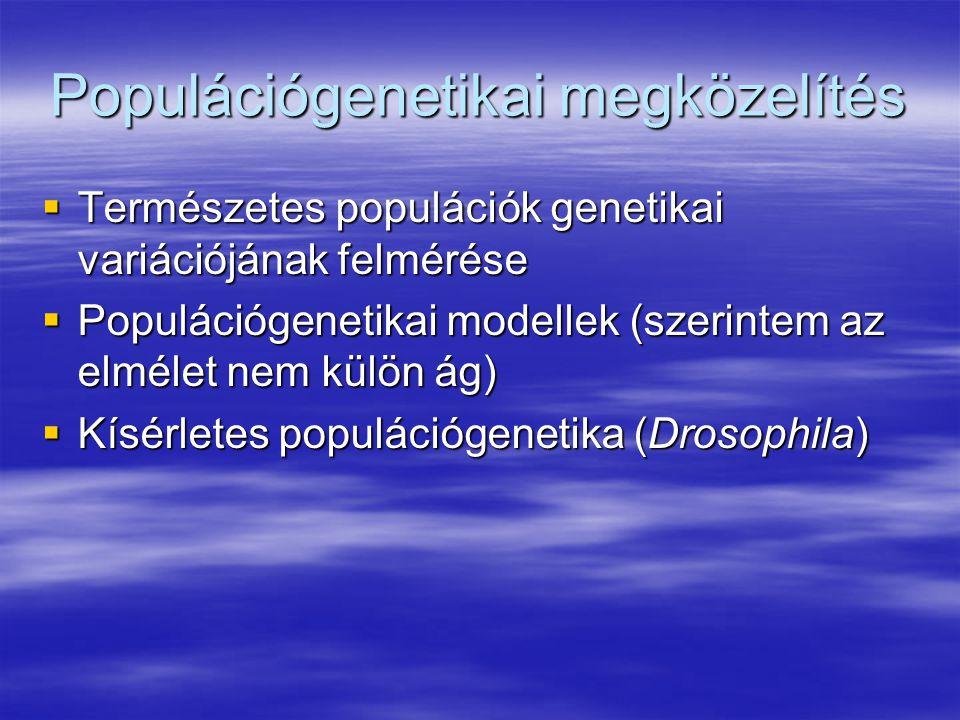 Populációgenetikai megközelítés  Természetes populációk genetikai variációjának felmérése  Populációgenetikai modellek (szerintem az elmélet nem külön ág)  Kísérletes populációgenetika (Drosophila)