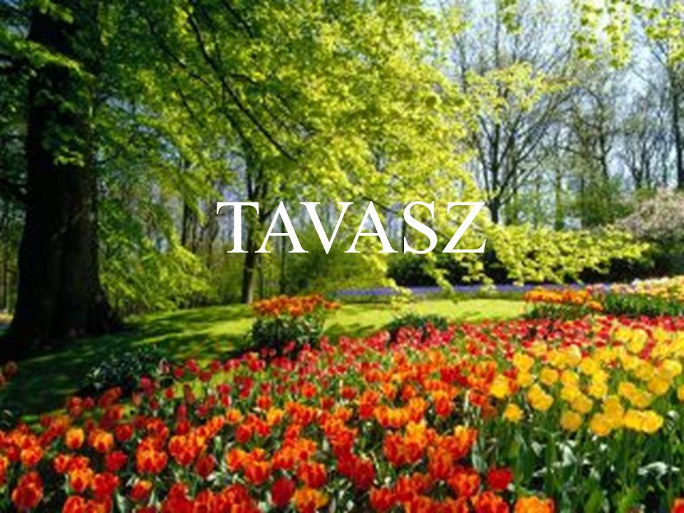 Tavasz a természetben: Az új kezdet ideje A legtöbb embert kimozdítja otthonából Cselekvésre, aktivitásra ösztönöz