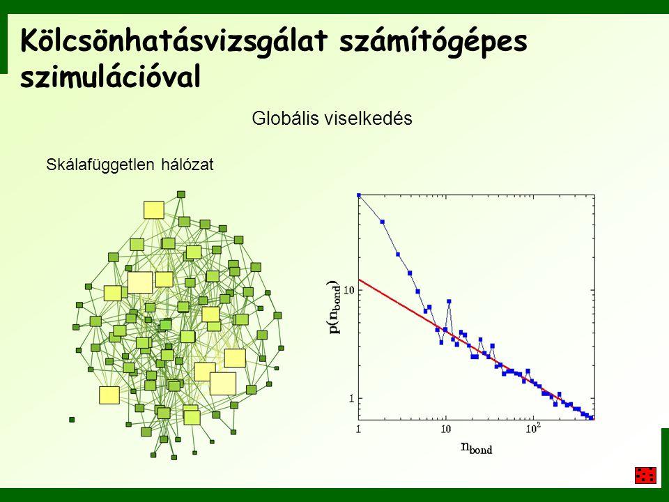 Kölcsönhatásvizsgálat számítógépes szimulációval Globális viselkedés Skálafüggetlen hálózat