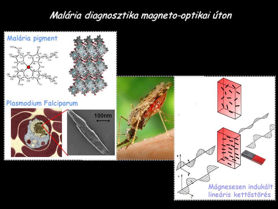 Optikai anizotrópia: ~10 Mágneses anizotrópia: ~2 Malária diagnosztika magneto-optikai úton Á.
