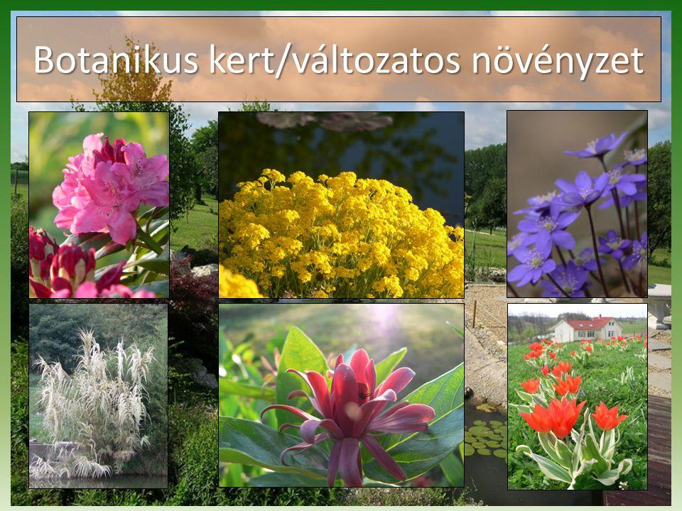 Botanikus kert/változatos növényzet