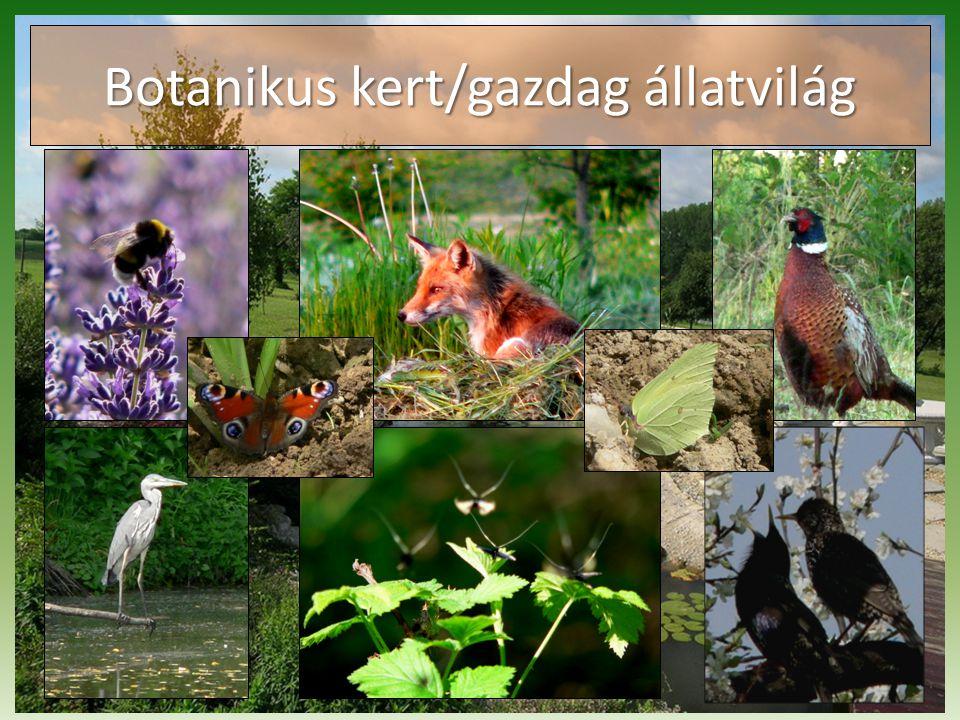Botanikus kert/gazdag állatvilág