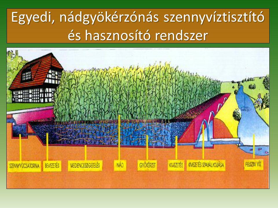 Egyedi, nádgyökérzónás szennyvíztisztító és hasznosító rendszer