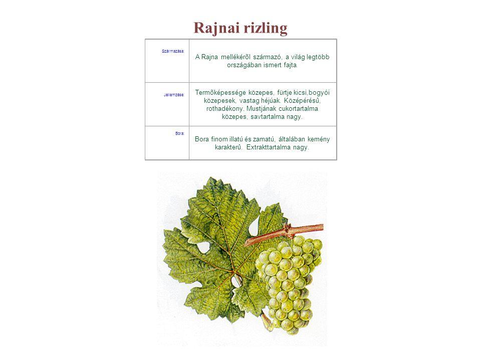 Rajnai rizling Származása: A Rajna mellékérõl származó, a világ legtöbb országában ismert fajta. Jellemzése: Termõképessége közepes, fürtje kicsi,bogy