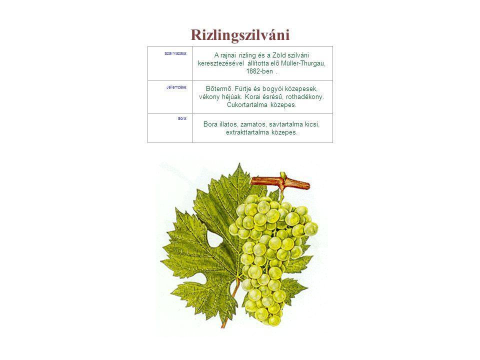 Rizlingszilváni Származása: A rajnai rizling és a Zöld szilváni keresztezésével állította elõ Müller-Thurgau, 1882-ben. Jellemzése: Bõtermõ. Fürtje és