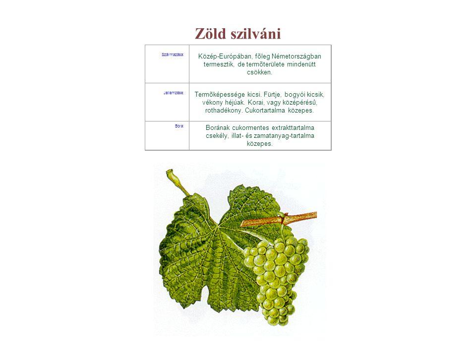 Zöld szilváni Származása: Közép-Európában, fõleg Németországban termesztik, de termõterülete mindenütt csökken. Jellemzése: Termõképessége kicsi. Fürt