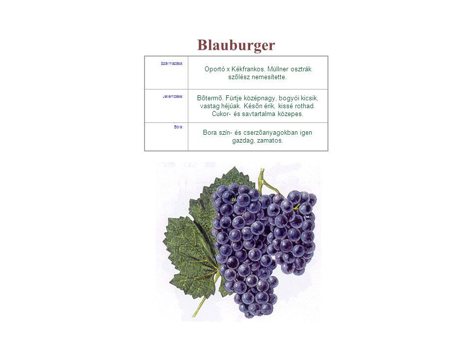 Blauburger Származása: Oportó x Kékfrankos. Müllner osztrák szõlész nemesítette. Jellemzése: Bõtermõ. Fürtje középnagy, bogyói kicsik, vastag héjúak.