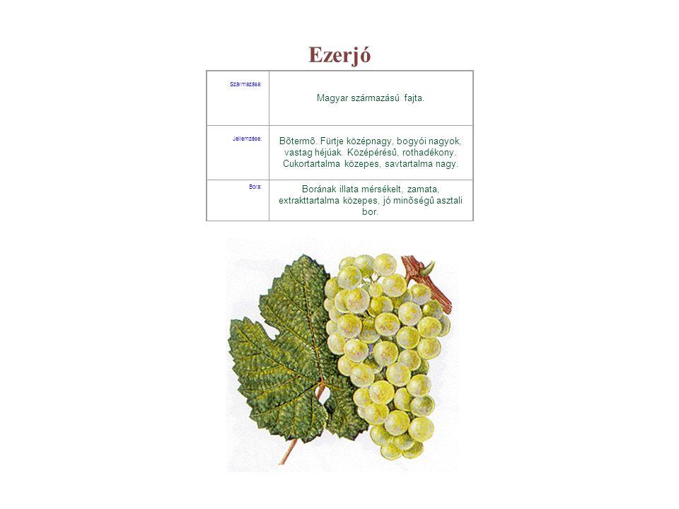 Chardonnay Származása: Francia származású, világszerte ismert és elterjedt fajta.