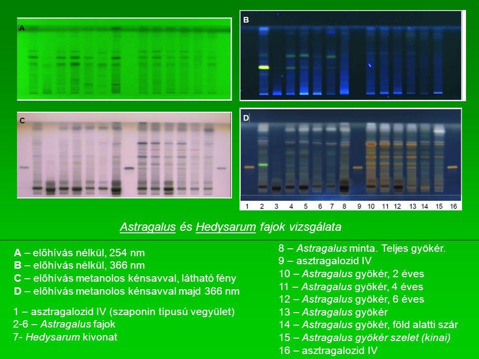 A – előhívás nélkül, 254 nm B – előhívás nélkül, 366 nm C – előhívás metanolos kénsavval, látható fény D – előhívás metanolos kénsavval majd 366 nm 1