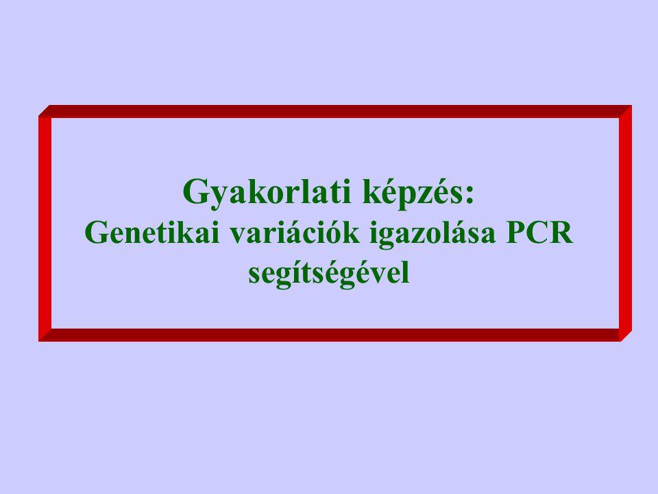 Gyakorlati képzés: Genetikai variációk igazolása PCR segítségével