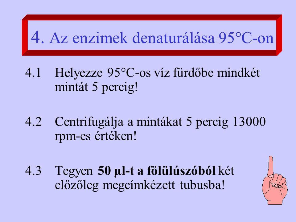 4. Az enzimek denaturálása 95°C-on 4.1Helyezze 95°C-os víz fürdőbe mindkét mintát 5 percig.