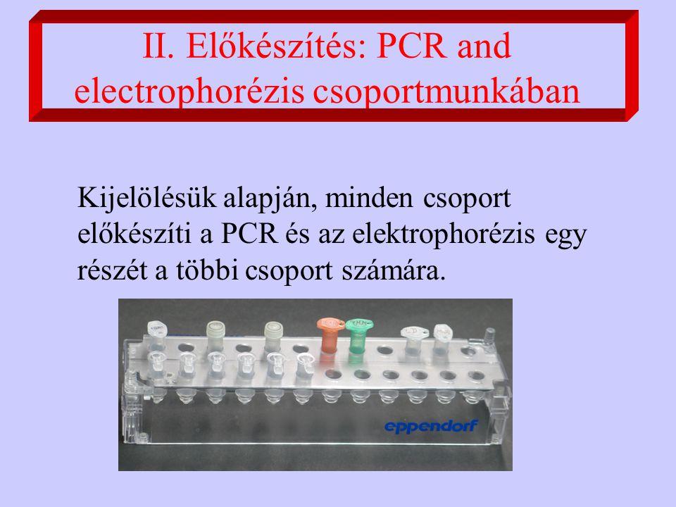 II. Előkészítés: PCR and electrophorézis csoportmunkában Kijelölésük alapján, minden csoport előkészíti a PCR és az elektrophorézis egy részét a többi