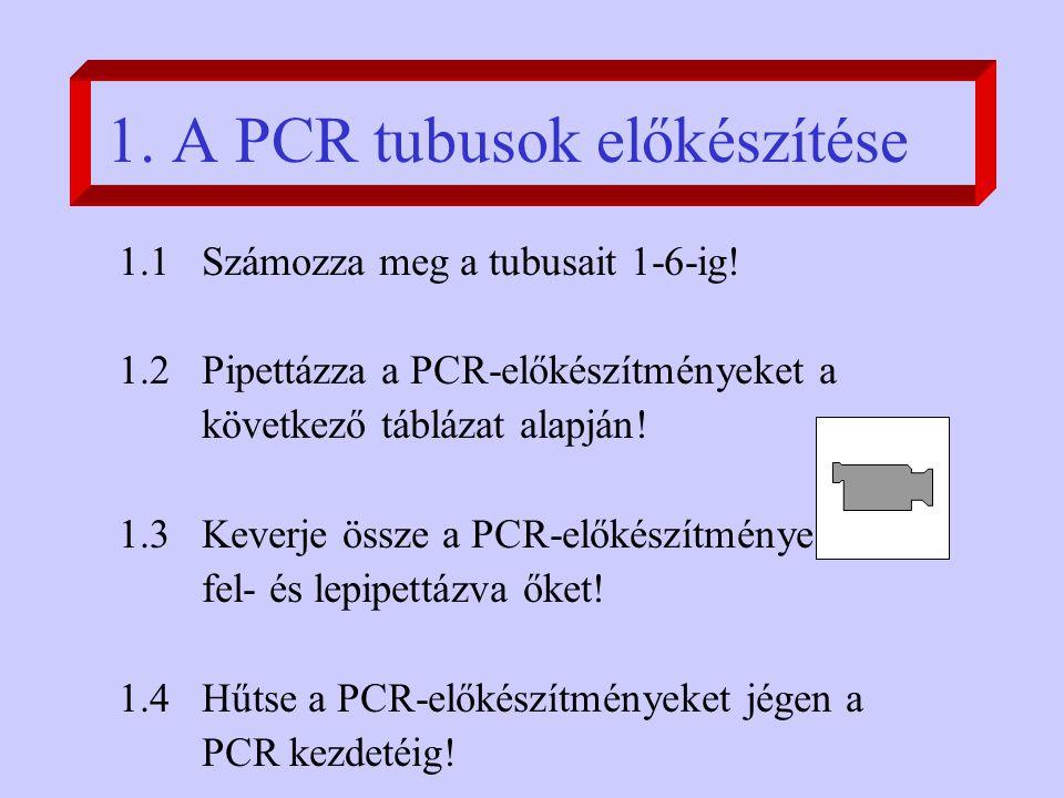 1. A PCR tubusok előkészítése 1.1 Számozza meg a tubusait 1-6-ig.
