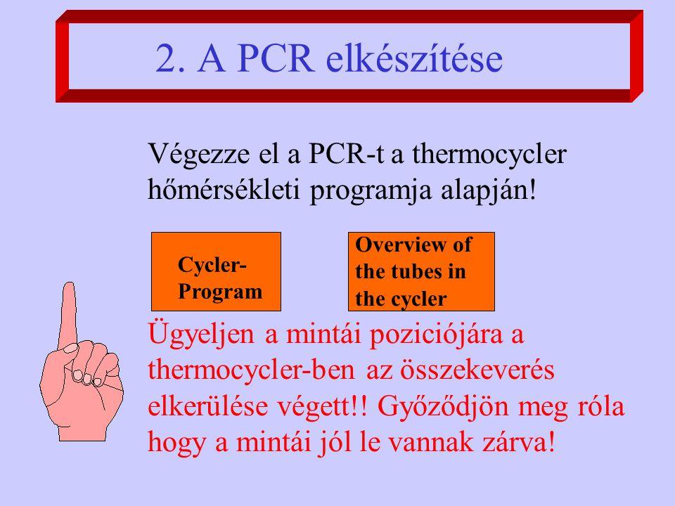 Végezze el a PCR-t a thermocycler hőmérsékleti programja alapján.