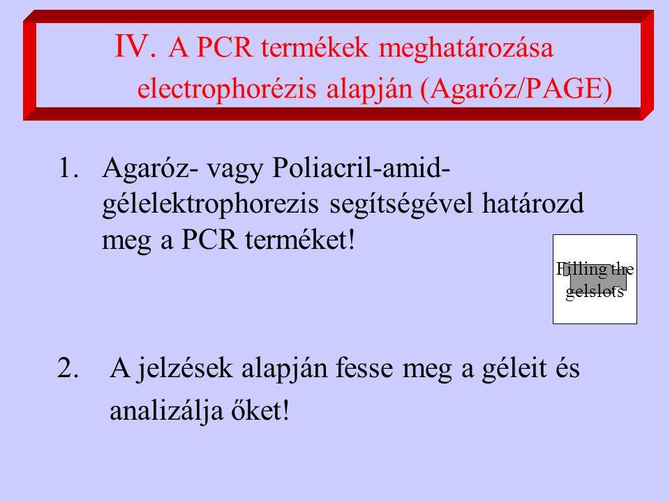 IV. A PCR termékek meghatározása electrophorézis alapján (Agaróz/PAGE) 1.Agaróz- vagy Poliacril-amid- gélelektrophorezis segítségével határozd meg a P