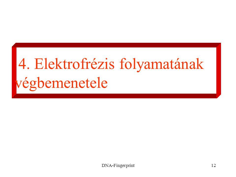 DNA-Fingerprint12 4. Elektrofrézis folyamatának végbemenetele