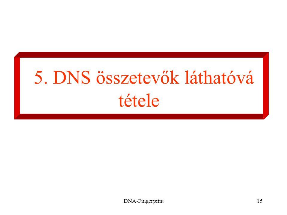 DNA-Fingerprint15 5. DNS összetevők láthatóvá tétele