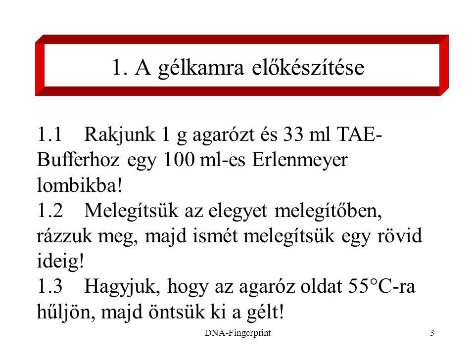 DNA-Fingerprint3 1. A gélkamra előkészítése 1.1 Rakjunk 1 g agarózt és 33 ml TAE- Bufferhoz egy 100 ml-es Erlenmeyer lombikba! 1.2 Melegítsük az elegy