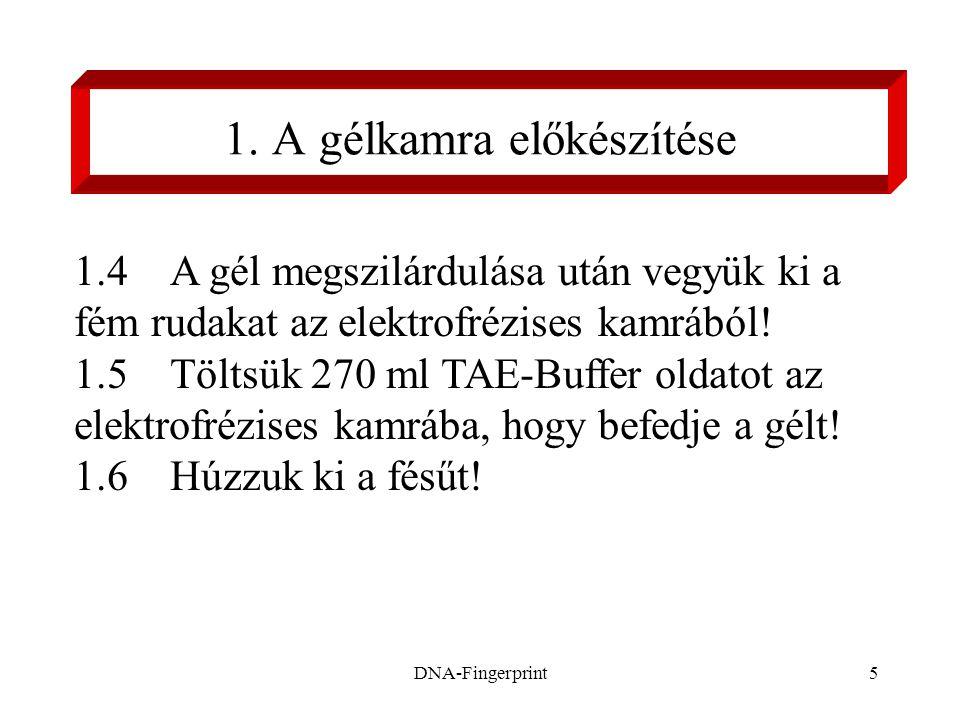 DNA-Fingerprint16 5.