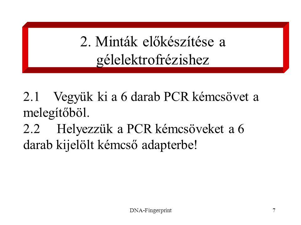 DNA-Fingerprint7 2. Minták előkészítése a gélelektrofrézishez 2.1Vegyük ki a 6 darab PCR kémcsövet a melegítőböl. 2.2 Helyezzük a PCR kémcsöveket a 6