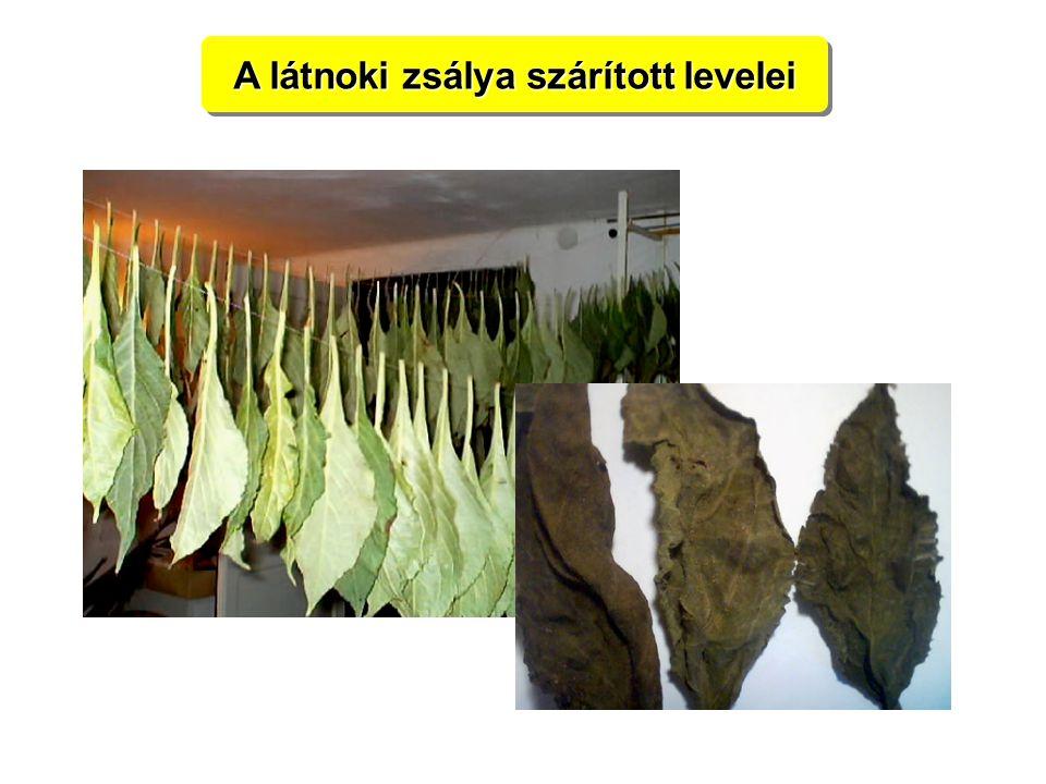 A látnoki zsálya szárított levelei