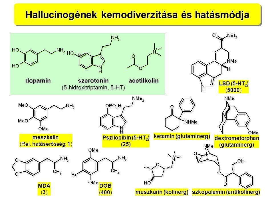 Hallucinogének kemodiverzitása és hatásmódja meszkalin (Rel. hatáserősség: 1) LSD (5-HT 2 ) (5000) MDA (3) DOB (400) Pszilocibin (5-HT 2 ) (25) dextro