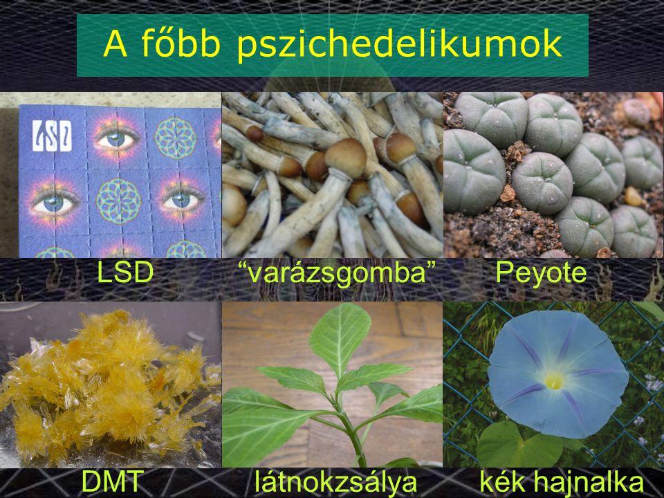 """LSD """"varázsgomba"""" Peyote DMT látnokzsálya kék hajnalka A főbb pszichedelikumok"""