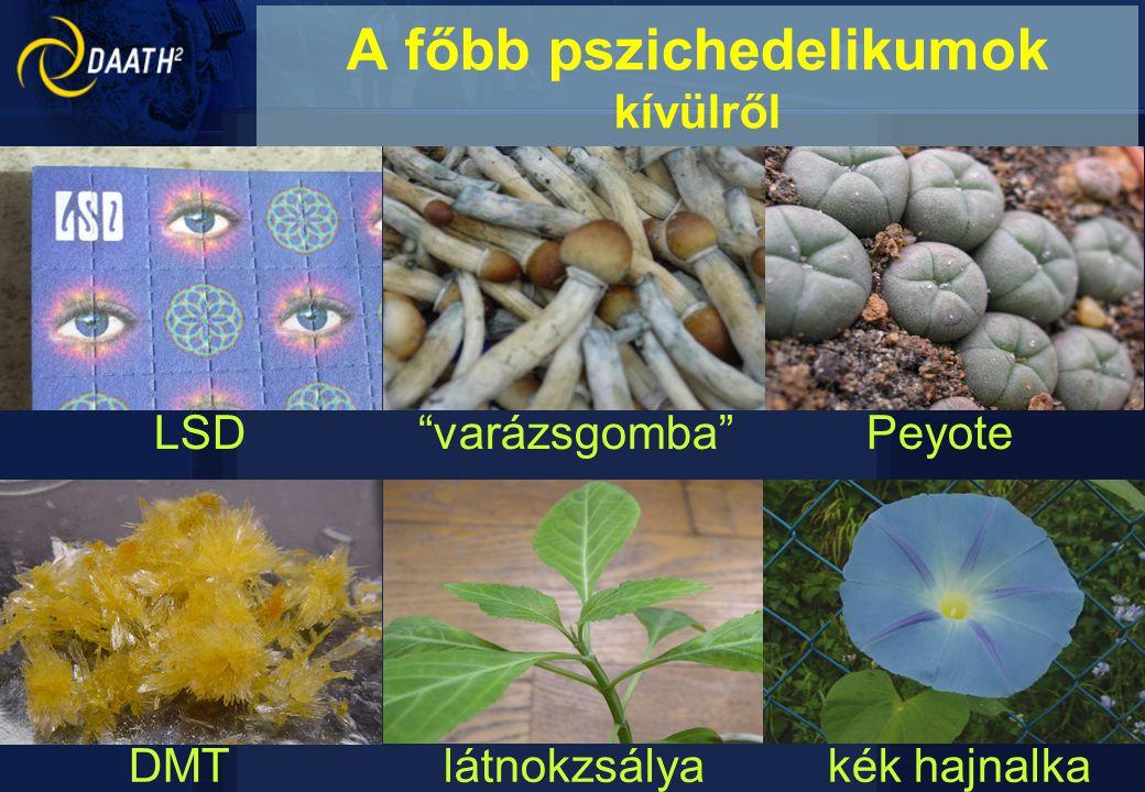 """LSD """"varázsgomba"""" Peyote DMT látnokzsálya kék hajnalka A főbb pszichedelikumok kívülről"""