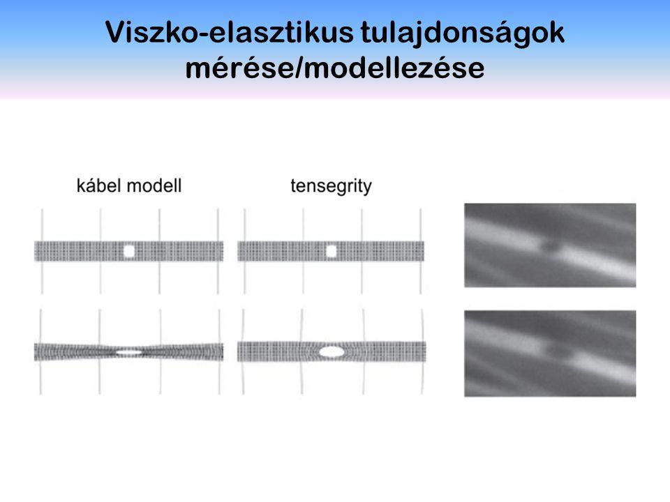 Viszko-elasztikus tulajdonságok mérése/modellezése