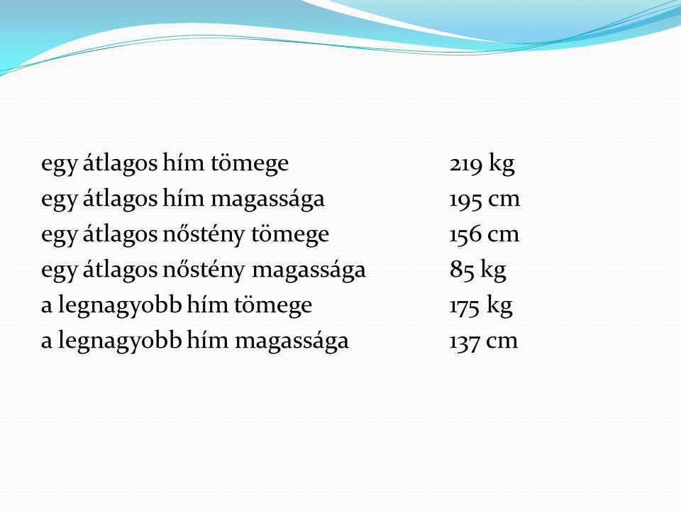 egy átlagos hím tömege219 kg egy átlagos hím magassága195 cm egy átlagos nőstény tömege156 cm egy átlagos nőstény magassága85 kg a legnagyobb hím töme