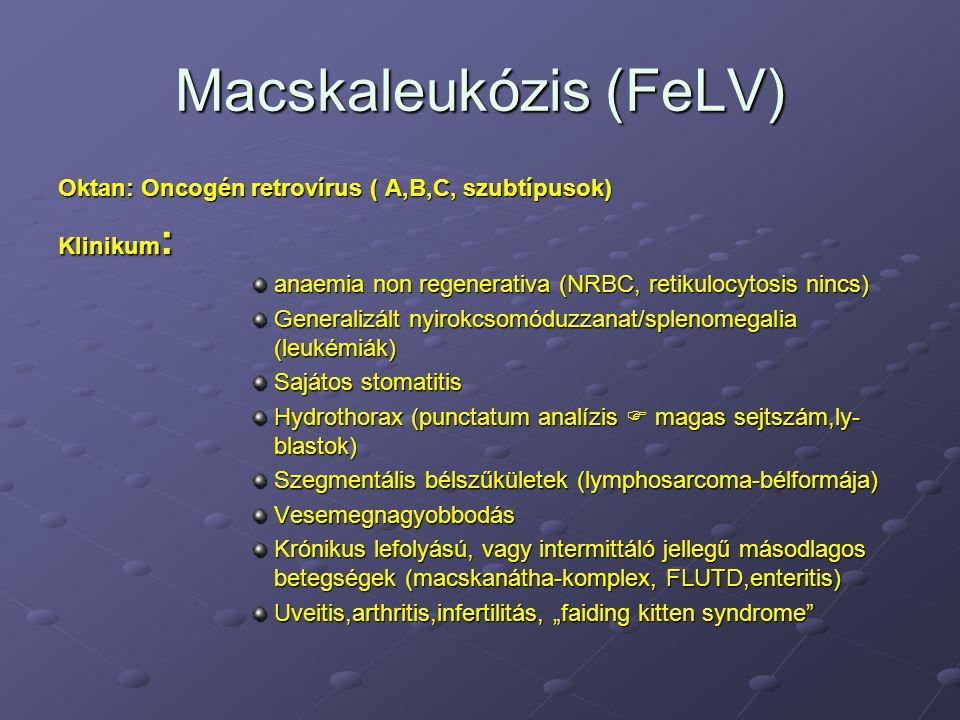 Klinikum perzisztáló láz, mely AB-ra nem javul Lymphadenopathia (erőteljes follicularis hyperplasia plasmasejtszám emelkedéssel  itt vírusreplikáció zajlik) stomatitis/gingivitis a molaris és buccalis felületen egyaránt  co-infekcio FeSFV-al gyakori idegrendszeri tünetek 5 %-ban ( ataxia,paralysis ) gasztrointestinális tünetek uveitis, anisocoria