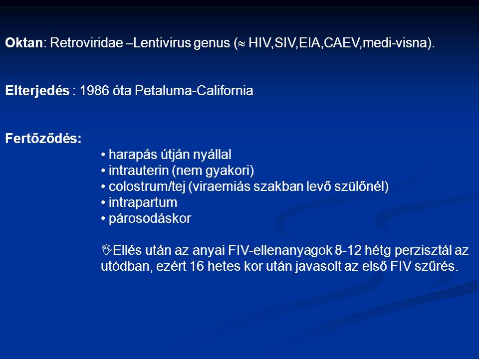 Oktan: Retroviridae –Lentivirus genus (  HIV,SIV,EIA,CAEV,medi-visna). Elterjedés : 1986 óta Petaluma-California Fertőződés: harapás útján nyállal in